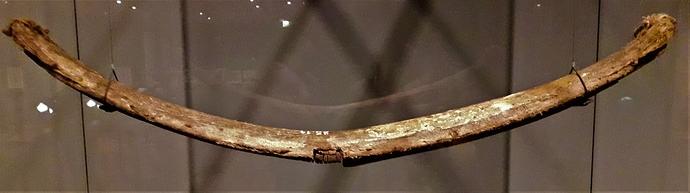 sarvikaari 1400-luku Keski Eurooppa
