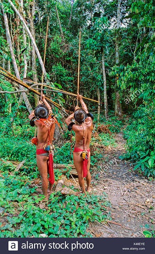 venezuela-south-america-yanomami-ironavi-tribe-indios-hunter-bow-arrow-men-man-archers-archer-hunting-hun-X48EYE