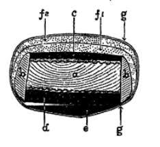 cross-section%20Mongolian